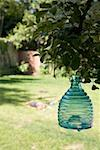 Glass insect trap hanging from a tree in a back yard Stock Photo - Premium Royalty-Free, Artist: Mark Wiens, Code: 653-01664007