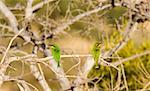 Two birds sitting on a branch Stock Photo - Premium Royalty-Free, Artist: AWL Images, Code: 653-01664428