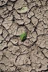 Green leaves on cracked mud Stock Photo - Premium Royalty-Free, Artist: Ragnar                        , Code: 653-01666258