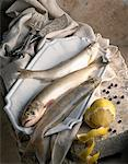 Lakefish char Stock Photo - Premium Royalty-Free, Artist: IIC, Code: 652-01666594