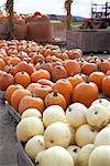 Pumpkins at Springside Farms Burlington, Ontario, Canada