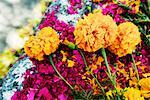 Close-up of Flowers and Dyed Wood Shavings on Grave, San Miguel de Allende, Mexico Stock Photo - Premium Royalty-Free, Artist: Jeremy Woodhouse, Code: 600-01717112
