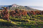 Vineyard in Motovun, Istria, Croatia    Stock Photo - Premium Royalty-Free, Artist: Jeremy Woodhouse, Code: 600-01717635