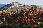 Vineyard in Motovun, Istria, Croatia    Stock Photo - Premium Royalty-Free, Artist: Jeremy Woodhouse, Code: 600-01717636