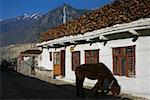 Mule standing in front of a house Annapurna Range, Himalayas, Nepal Stock Photo - Premium Royalty-Free, Artist: Glowimages               , Code: 625-01752960