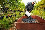 Farmer in Vineyard    Stock Photo - Premium Rights-Managed, Artist: Ron Fehling, Code: 700-01764854