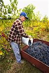 Farmer in Vineyard    Stock Photo - Premium Rights-Managed, Artist: Ron Fehling, Code: 700-01764858