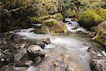 Rapids in Creek, Fiordland National Park, South Island, New Zealand    Stock Photo - Premium Rights-Managed, Artist: Lalove Benedict, Code: 700-01765172