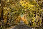 Road Through Forest in Autumn, Akan National Park, Hokkaido, Japan    Stock Photo - Premium Rights-Managed, Artist: Jochen Schlenker, Code: 700-01788001