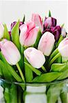Close-Up of Tulips in Vase    Stock Photo - Premium Rights-Managed, Artist: David Muir, Code: 700-01788534
