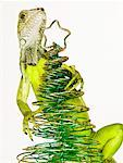 Iguana Climbing Christmas Tree    Stock Photo - Premium Rights-Managed, Artist: Dan Lim, Code: 700-01837704