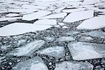 Pack Ice and Ice Floes, Antarctica    Stock Photo - Premium Royalty-Free, Artist: F. Lukasseck, Code: 600-01837897