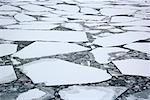 Pack Ice and Ice Floes, Antarctica    Stock Photo - Premium Royalty-Free, Artist: F. Lukasseck, Code: 600-01837898