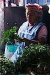 Woman Preparing Vegetables at the Market, Ocotlan de Morelos, Oaxaca, Mexico    Stock Photo - Premium Rights-Managed, Artist: Jeremy Woodhouse, Code: 700-01838833