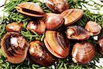 Clams on seaweed Stock Photo - Premium Royalty-Free, Artist: Minden Pictures, Code: 659-01852271