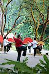 People Practicing Tai Chi, Singapore Botanical Gardens, Singapore