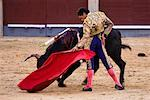 Bullfighting, Plaza de Toros de las Ventas, Madrid, Spain    Stock Photo - Premium Rights-Managed, Artist: R. Ian Lloyd, Code: 700-01879829