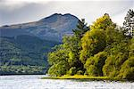 Trees on Shoreline, Loch Ard, Trossachs, Scotland    Stock Photo - Premium Rights-Managed, Artist: Tim Hurst, Code: 700-01953786