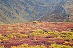 Alpine Tundra in Autumn, Tombstone Territorial Park, Yukon, Canada    Stock Photo - Premium Royalty-Free, Artist: J. David Andrews, Code: 600-01954705