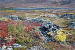 River through Tundra, North Klondike River Valley, Tombstone Territorial Park, Yukon, Canada    Stock Photo - Premium Royalty-Free, Artist: J. David Andrews, Code: 600-01954711