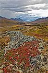 Alpine Tundra in Autumn, Tombstone Territorial Park, Yukon, Canada    Stock Photo - Premium Royalty-Free, Artist: J. David Andrews, Code: 600-01954713