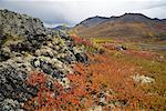 Alpine Tundra in Autumn, Tombstone Territorial Park, Yukon, Canada    Stock Photo - Premium Royalty-Free, Artist: J. David Andrews, Code: 600-01954714