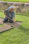 Man Working on Turf Farm, Thailand    Stock Photo - Premium Rights-Managed, Artist: dk & dennie cody, Code: 700-01954857