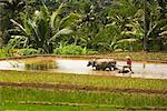 Terrace Farms, Dieng Plateau. Central Java, Java, Indonesia    Stock Photo - Premium Rights-Managed, Artist: dk & dennie cody, Code: 700-01954920