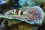 Tropical Fish in Aquarium, Jakarta, Java, Indonesia    Stock Photo - Premium Rights-Managed, Artist: dk & dennie cody, Code: 700-01954938