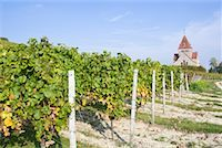 Chapel and Vineyard, Rheinhessen, Gau-Bickelheim, Alzey-Worms, Rhineland-Palatinate Germany    Stock Photo - Premium Rights-Managednull, Code: 700-01955067