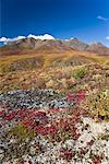 Hillside and Mountains, Tombstone Territorial Park, Yukon, Canada    Stock Photo - Premium Rights-Managed, Artist: J. David Andrews, Code: 700-01955404