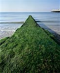 Breakwater covered with algae on Brighton Beach, England Stock Photo - Premium Royalty-Free, Artist: CulturaRM, Code: 653-02001223