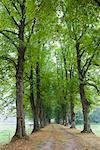 Path Lined With Lime Trees, Mecklenburg-Western Pomerania, Germany    Stock Photo - Premium Rights-Managed, Artist: F. Lukasseck, Code: 700-02010825