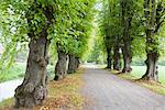 Lime Trees at Bothmer Castle, Mecklenburg-Western Pomerania, Germany    Stock Photo - Premium Rights-Managed, Artist: F. Lukasseck, Code: 700-02010827