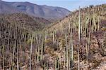 Overview of Cactus Forest, Oaxaca, Mexico