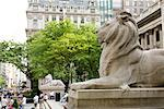 Lion Statues in Front of Lenox Library, New York Public Library, New York City, New York, USA    Stock Photo - Premium Rights-Managed, Artist: Arian Camilleri, Code: 700-02046127