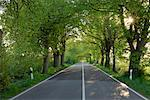 Tree-Lined Country Road, Ruegen, Mecklenburg-Vorpommern, Germany    Stock Photo - Premium Royalty-Free, Artist: Martin Ruegner, Code: 600-02046267
