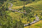 Procession through Rice Fields, Bali, Indonesia    Stock Photo - Premium Rights-Managed, Artist: Carl Valiquet, Code: 700-02046365