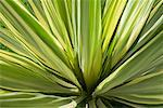 Close-Up of Plant, Indonesia    Stock Photo - Premium Rights-Managed, Artist: Carl Valiquet, Code: 700-02046367