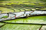 Rice Terraces, Sumatra, Indonesia    Stock Photo - Premium Rights-Managed, Artist: R. Ian Lloyd, Code: 700-02046563