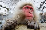 Close-up of Japanese Macaque, Jigokudani Onsen, Nagano, Japan Stock Photo - Premium Royalty-Free, Artist: Jeremy Woodhouse, Code: 600-02056297