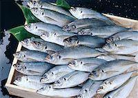 silver box - Common Horse Mackerel Stock Photo - Premium Royalty-Freenull, Code: 670-02108053
