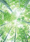 Sunlight Streaming Through the Leaves of Trees Stock Photo - Premium Royalty-Freenull, Code: 670-02108210