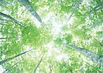 Sunlight Streaming Through the Leaves of Trees Stock Photo - Premium Royalty-Freenull, Code: 670-02108211