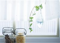 Ivy nearby the window Stock Photo - Premium Royalty-Freenull, Code: 670-02118236