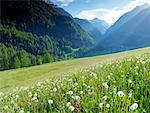 Alpine Meadow, Nationalpark Hohe Tauern, Austria    Stock Photo - Premium Rights-Managed, Artist: Jonathan Andrew, Code: 700-02121177