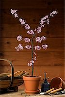 Potted Plant Blossoming into Yen Sign    Stock Photo - Premium Rights-Managednull, Code: 700-02121571