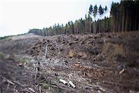 Deforestation, Harz National Park, Saxony-Anhalt, Germany    Stock Photo - Premium Rights-Managednull, Code: 700-02130490