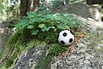 Miniature Soccer Ball by Clover, Harz National Park, Saxony-Anhalt, Germany    Stock Photo - Premium Rights-Managed, Artist: photo division, Code: 700-02130505