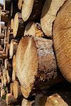 Stack of Lumber, Harz National Park, Saxony-Anhalt, Germany Stock Photo - Premium Rights-Managed, Artist: photo division, Code: 700-02130514
